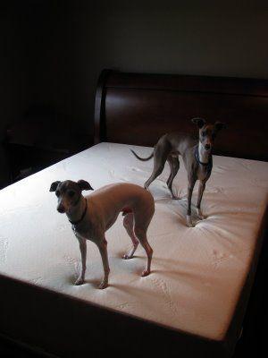 Koirien makuuhuone? #tempur