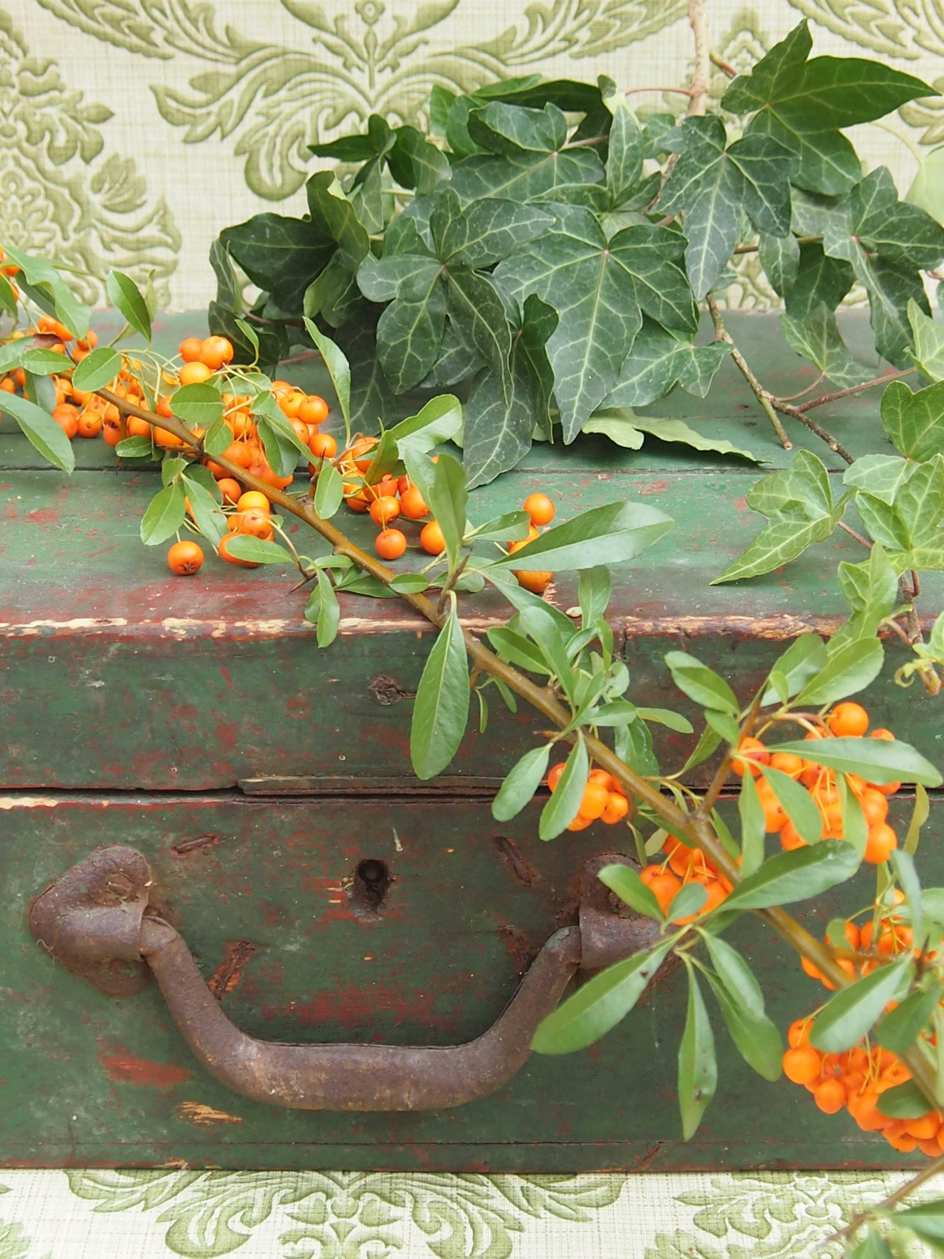 Efeu Und Beeren Blumen Und Pflanzen Efeu Pflanzen Und Beeren