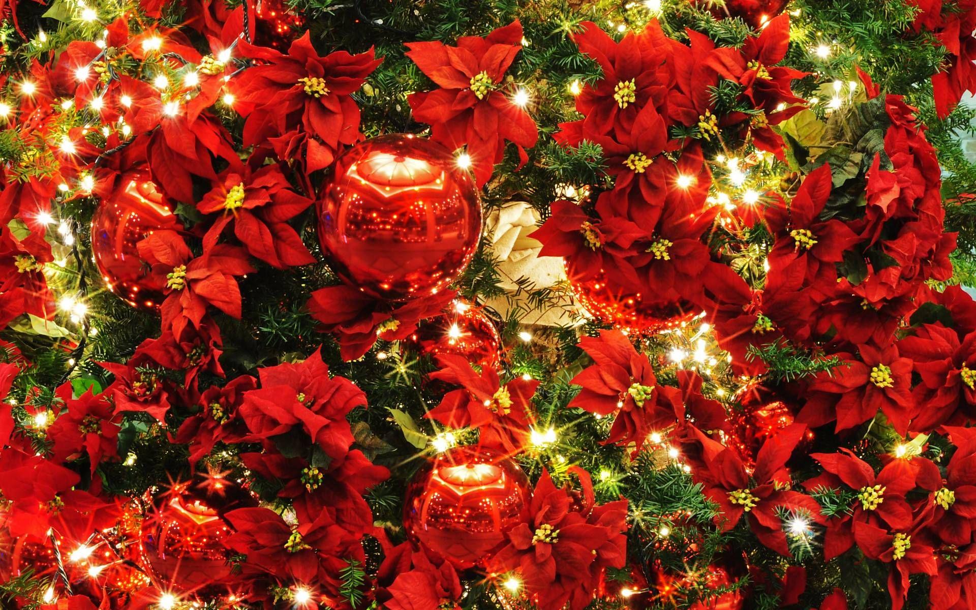 【50歳以上】 クリスマス 画像 壁紙 クリスマス壁紙, クリスマスの壁紙, ウォールステッカー クリスマス