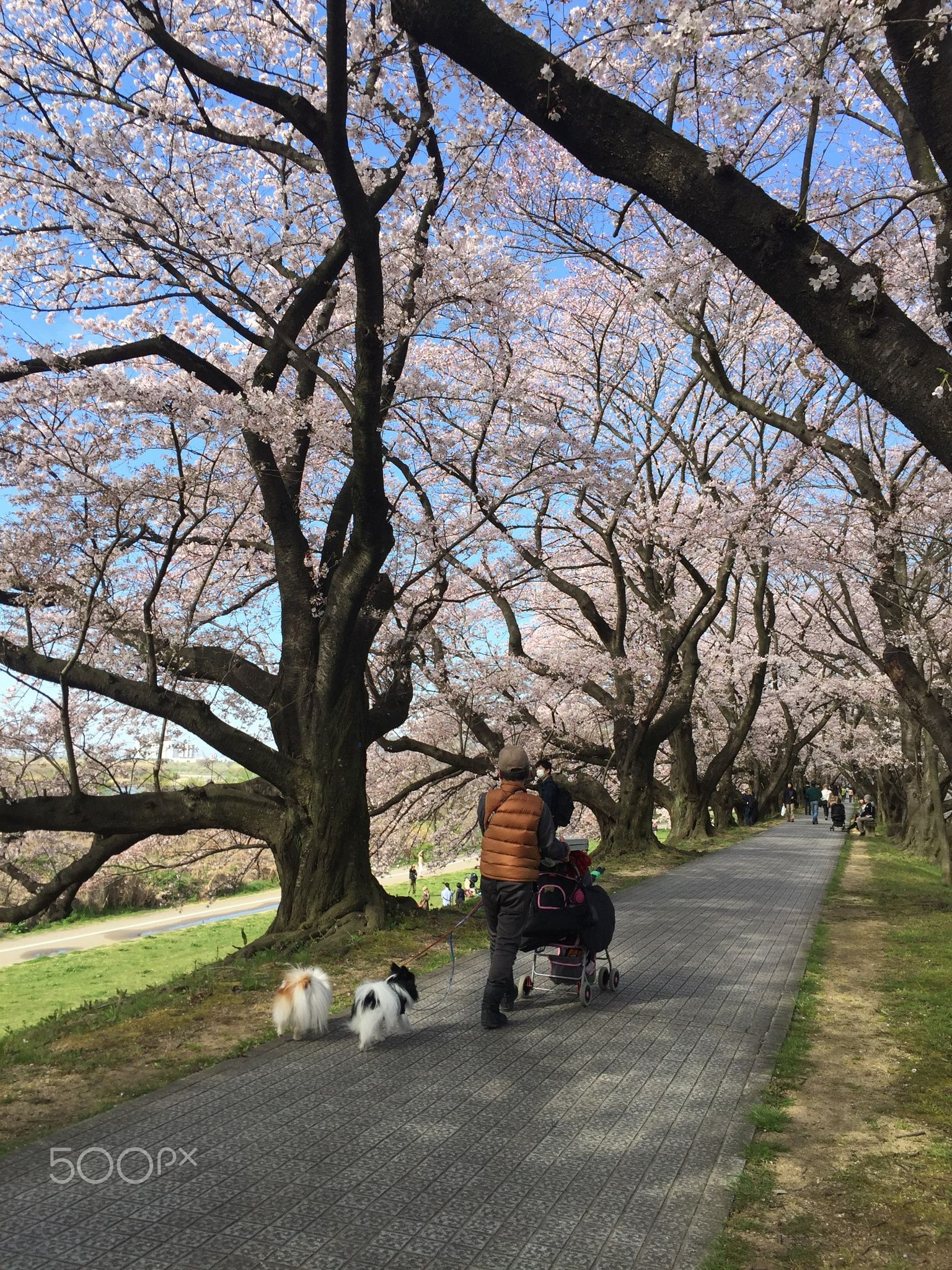 Walking with dogs - At Sewaritei.