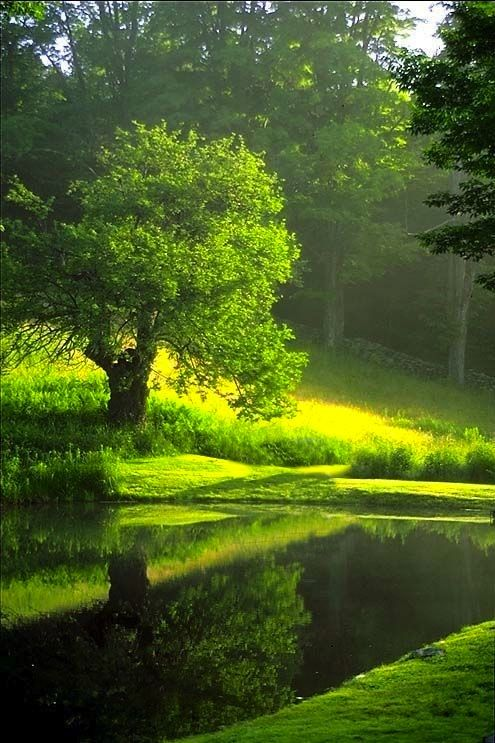 Pin On Green Gorgeous Nature S Favorite Color