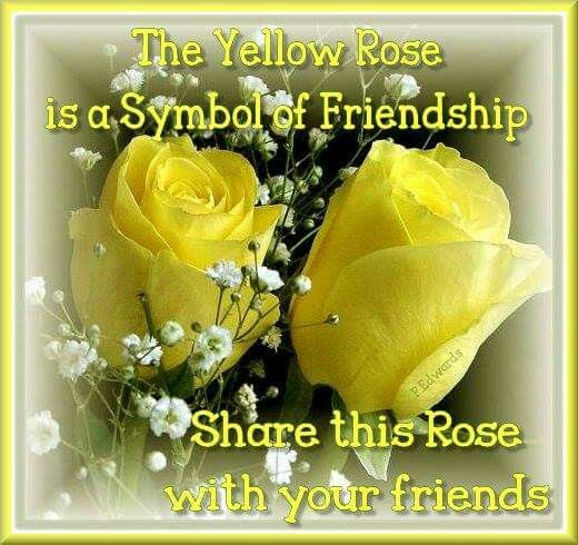 The Yellow Rose Is A Symbol Of Friendship With Images