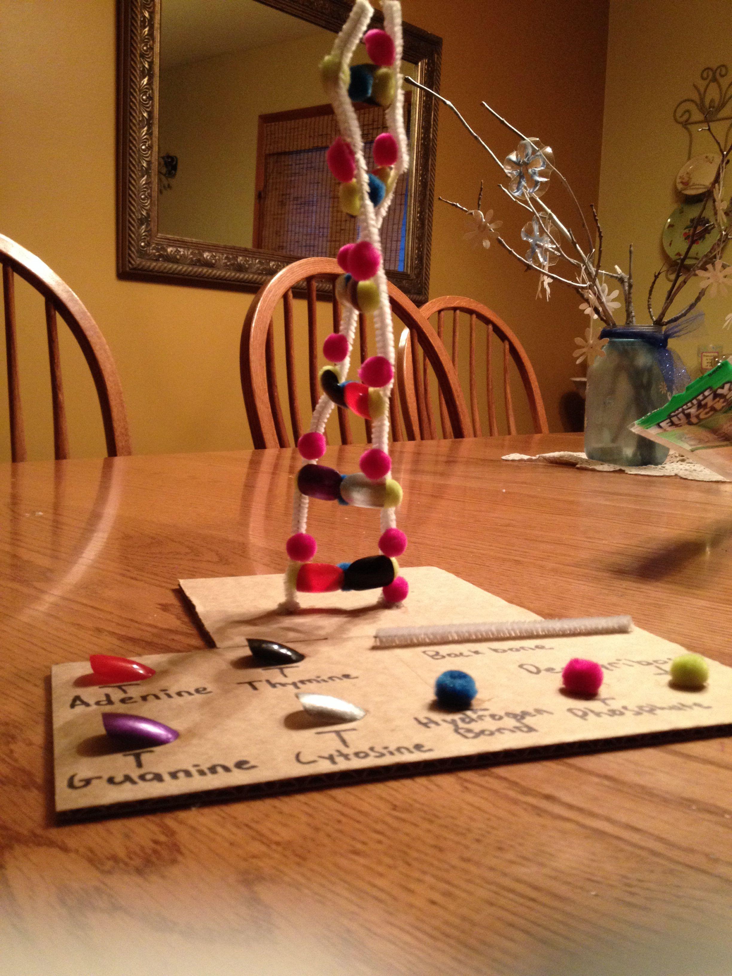 3D DNA model for biology Random stuff Pinterest Dna