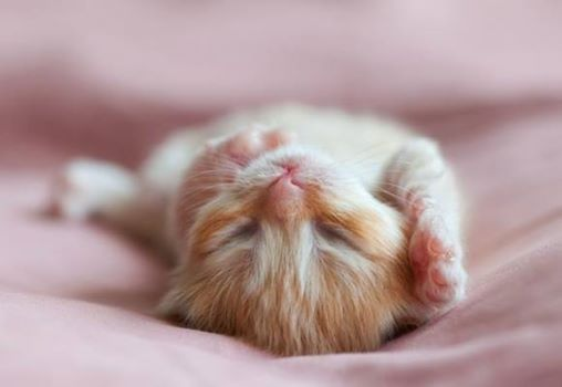 Photo Pisolino Time A Topo Kittens Cutest Cute Animals Animals