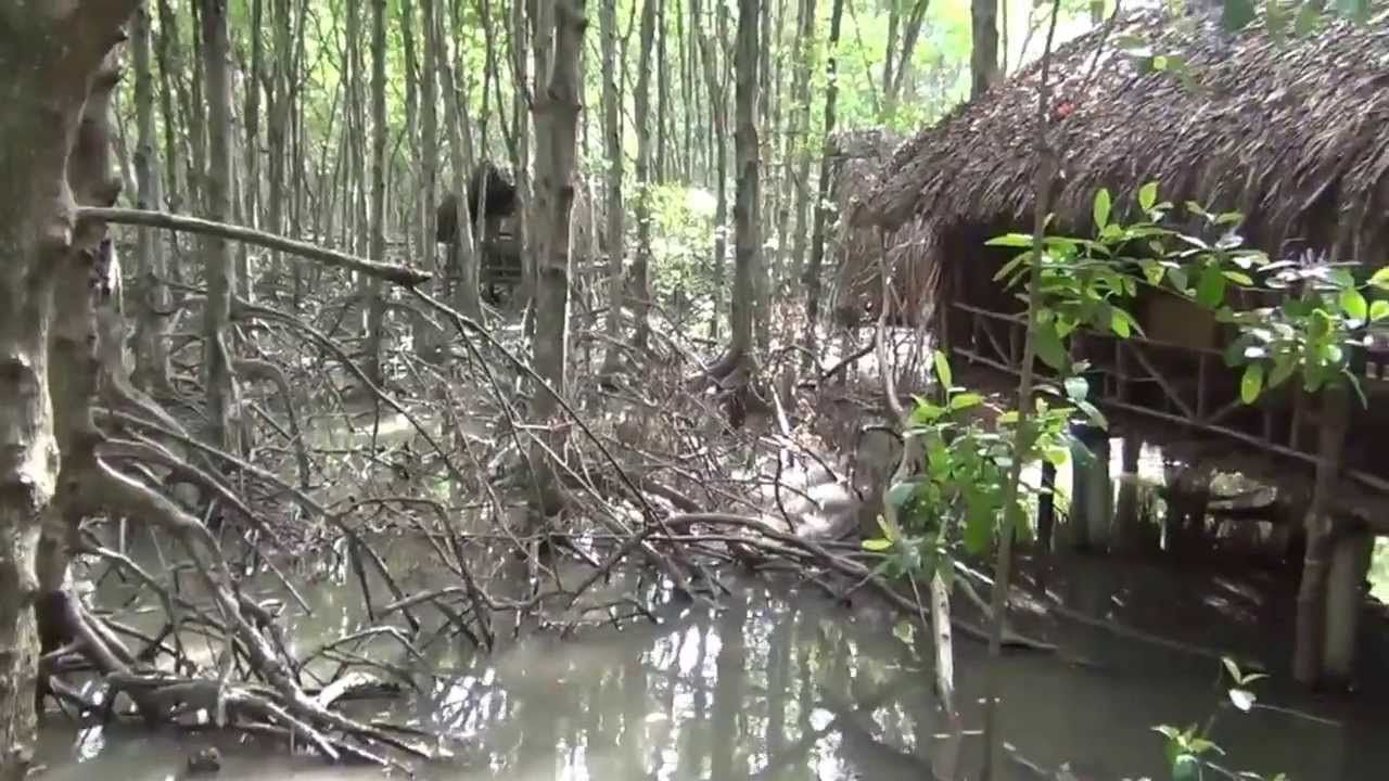 Du lịch Đảo Khỉ ở Cần Giờ (2)