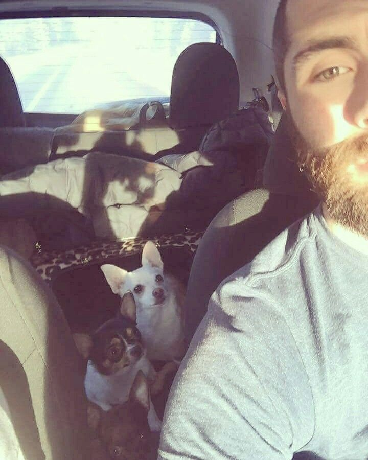 ❤️ Les hommes barbus aiment les chihuahuas ❤️  www.machupitouchihuahua.com
