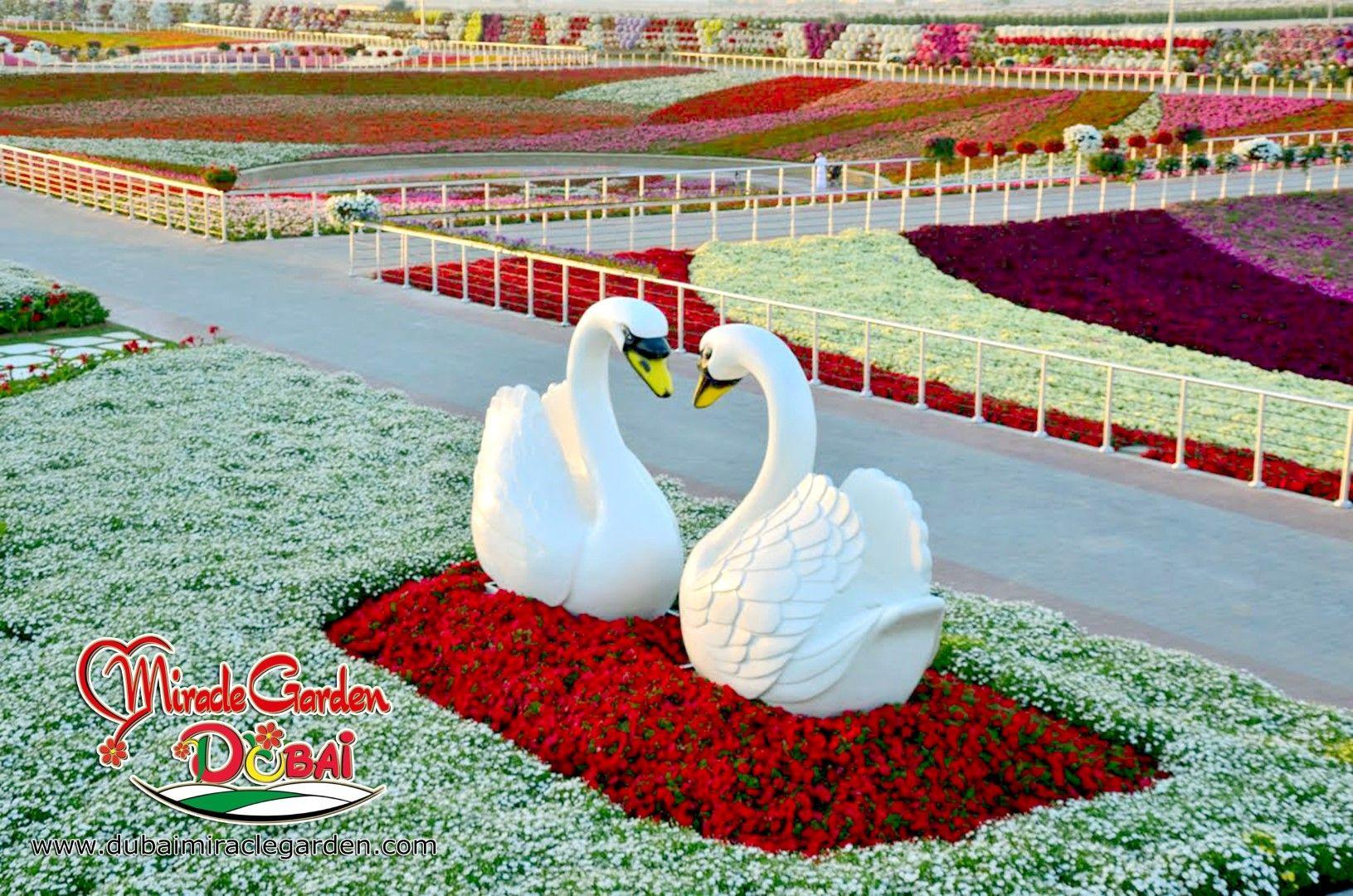 Dubai Miracle Garden The World's Biggest Natural Flower