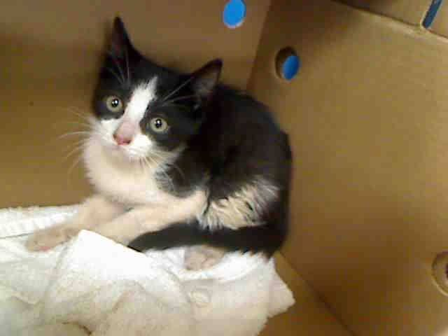 13 Week Old Capt Crunch His 3 Friends Family Need Out Of Nycacc