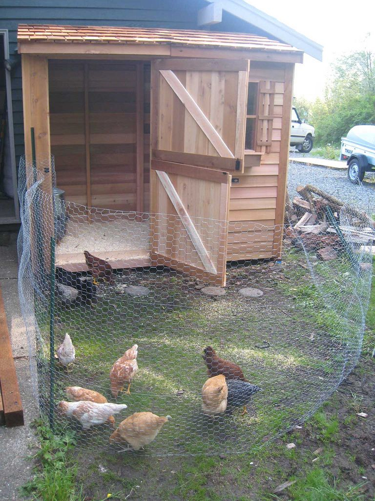 5 simple steps on how to build a backyard chicken coop chicken