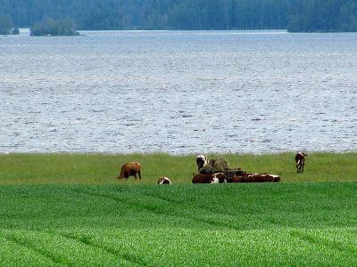 Ullava lake. Central Ostrobothnia province of Western Finland - Keski-Pohjanmaa