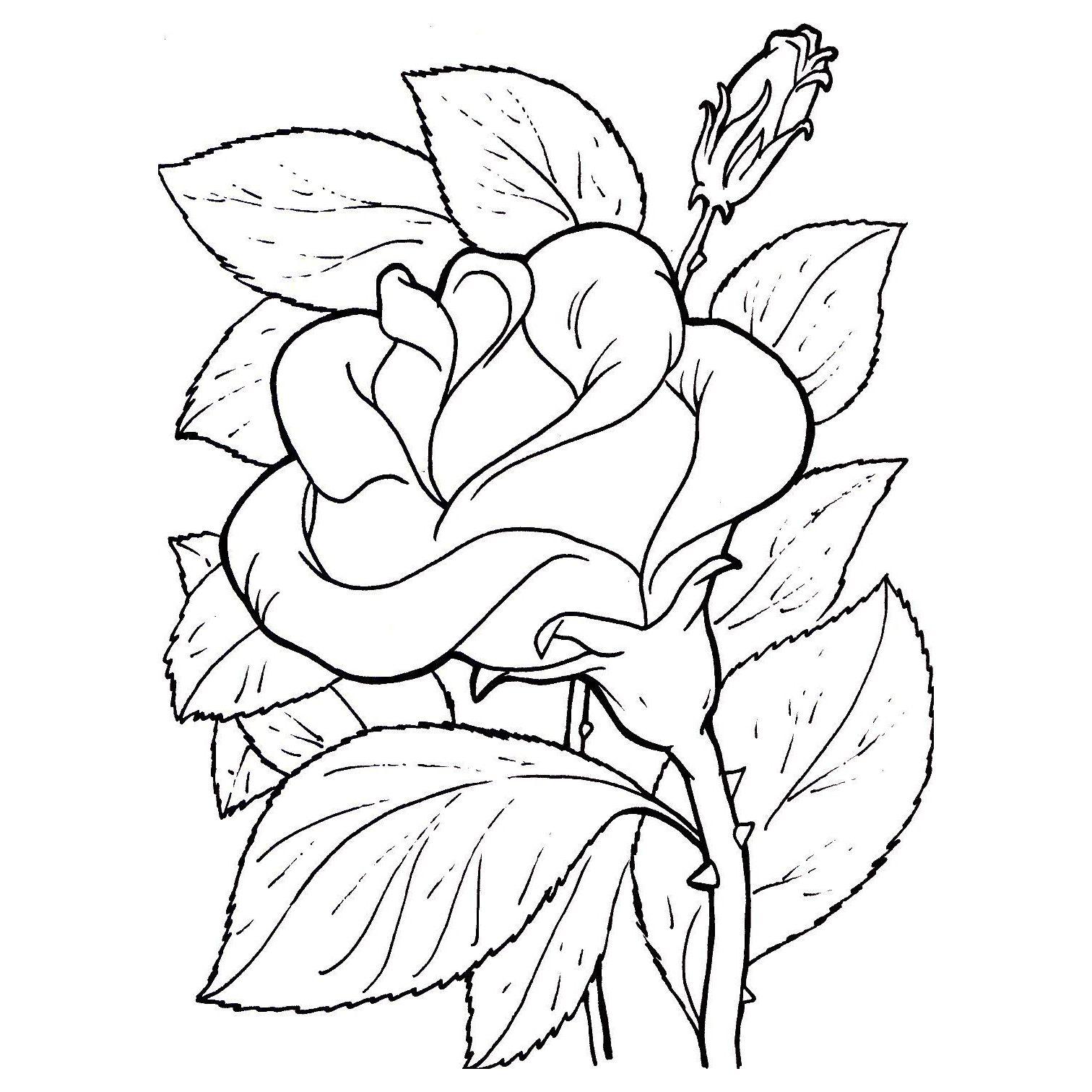 moldes de flores para pintar en tela    Pinteres