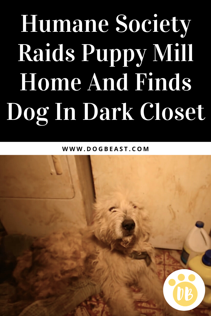 Humane Society Raids Puppy Mill Home And Finds Dog In Dark Closet