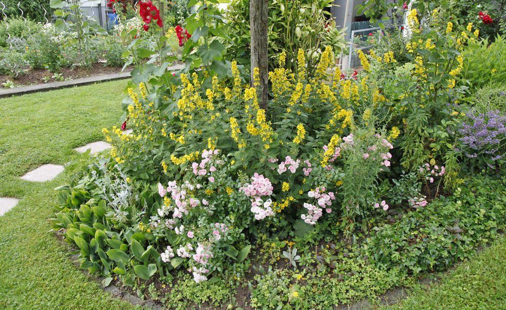 Inselbeet Anlegen Und Gestalten Garten Bepflanzen Stauden Bauerngarten