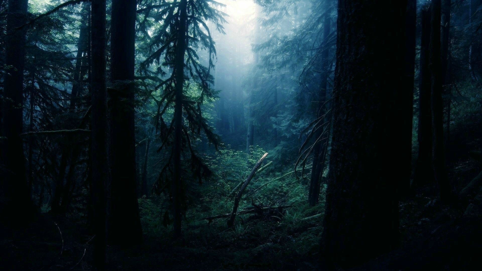 Forest Clearing Forest Wallpaper No 199900 Forest Wallpaper Dark Forest Dark Wallpaper