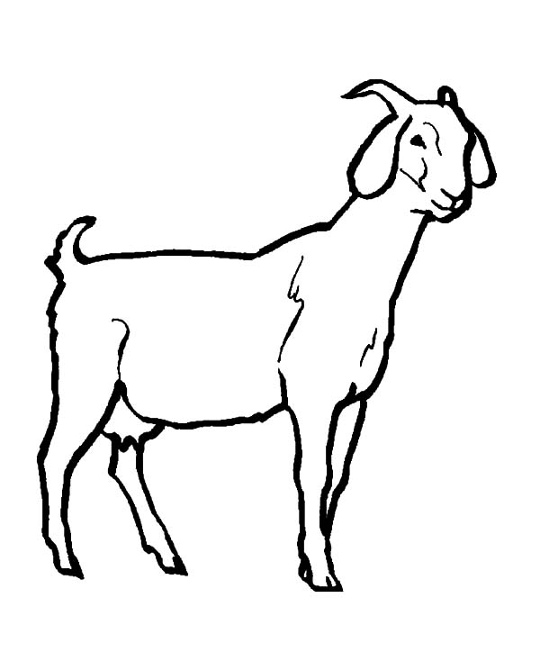 Livestock Goat Coloring Pages Color Luna Livestock Goats