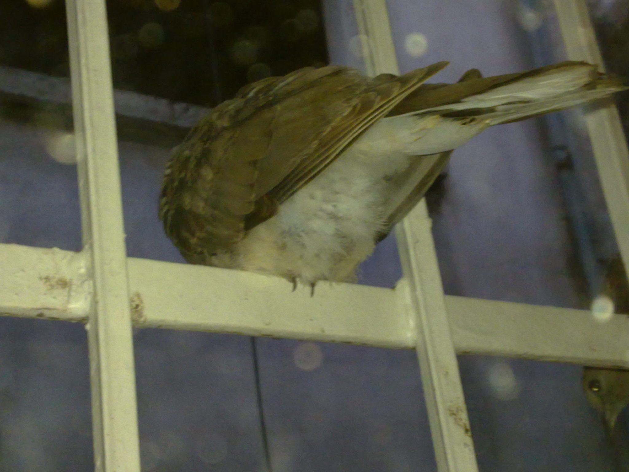 Bird Ass