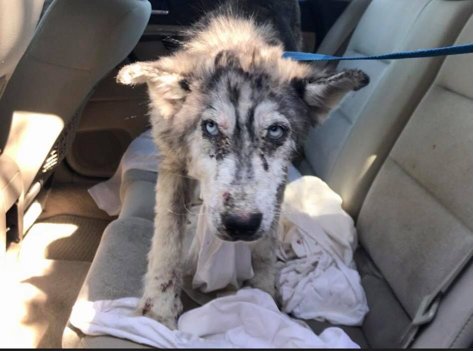 10 29 17 People Drove By The Young Terribly Neglected Dog On A Busy Highway In Southern California But No One Stopped To Help That Is Needs Love Rescue Dogs Sick Dog Dogs