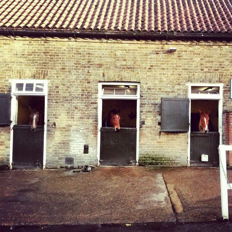 Richmond Park, London #richmondpark #london #horses