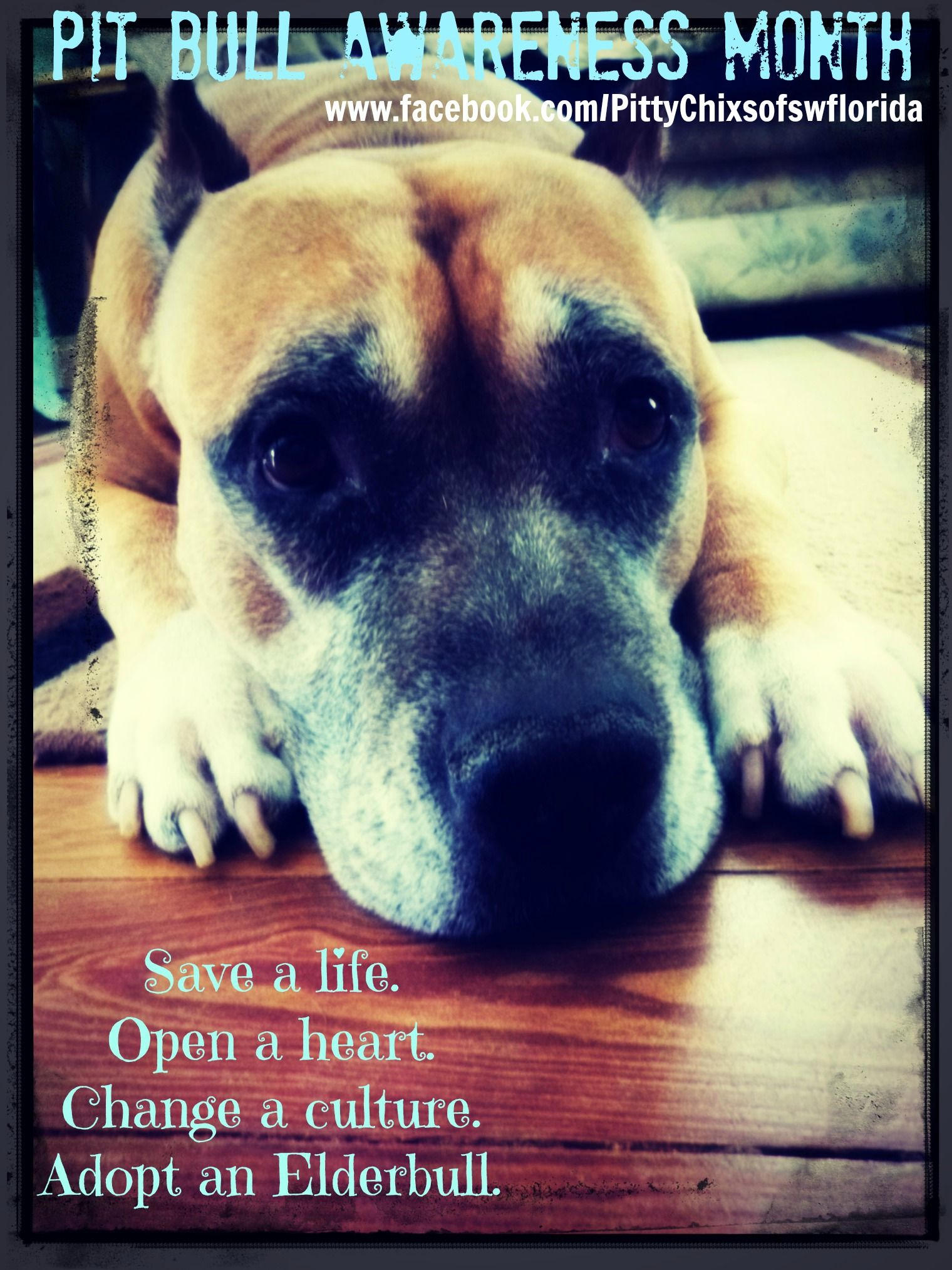 November Is Adopt A Senior Dog Month And There S Still One Week Left To Make A Difference For Older Pups Share A Pitbulls Adoption Animal Advocacy
