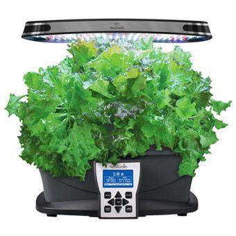 Indoor Gardening Contest 2015 Herb Seeds 640 x 480