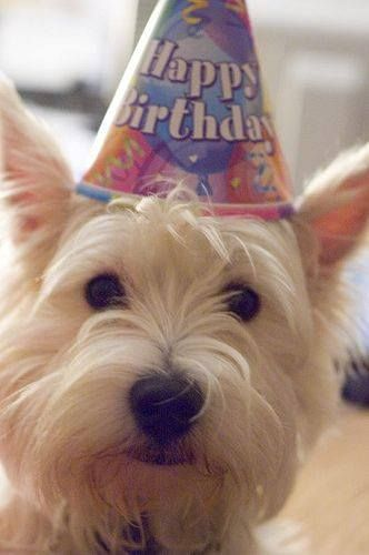 Aw! So cute An adorable dog with a birthday hat on his head. :)