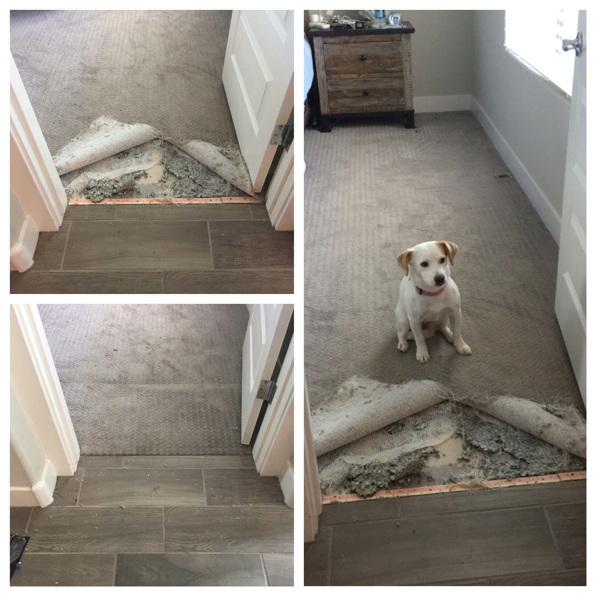 Pet Damage Carpet Repair Carpet Repair Berber Carpet How To Clean Carpet