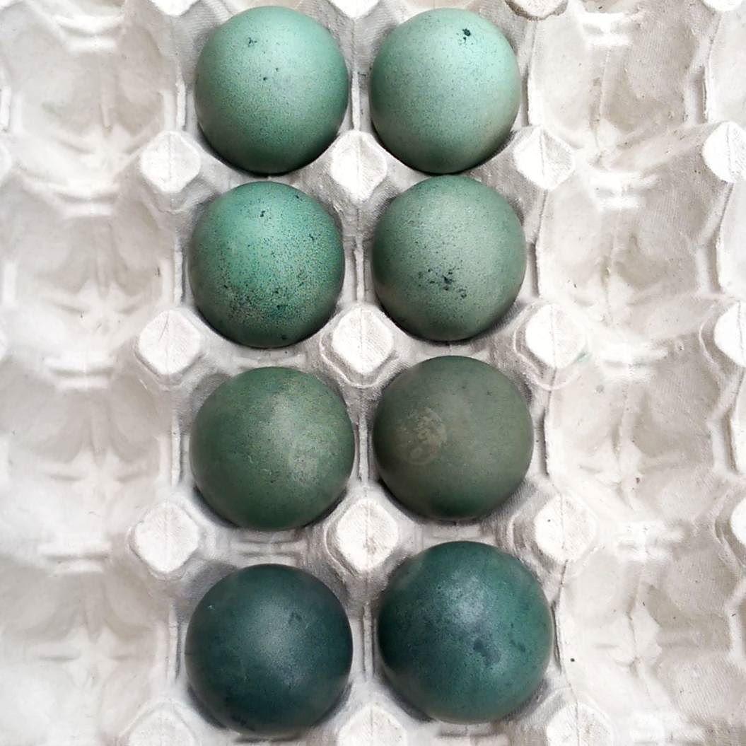 Smukke farvet æg  #påske #easter #påskeæg #farvetæg #bejsetæg #homemade #diy #smukkefarver by marielouise_kirkegaard