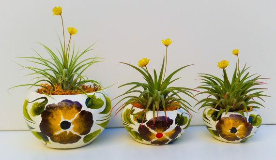 Mexican Fiesta Air Plant Displays/ Hand Made by shopTerrariums