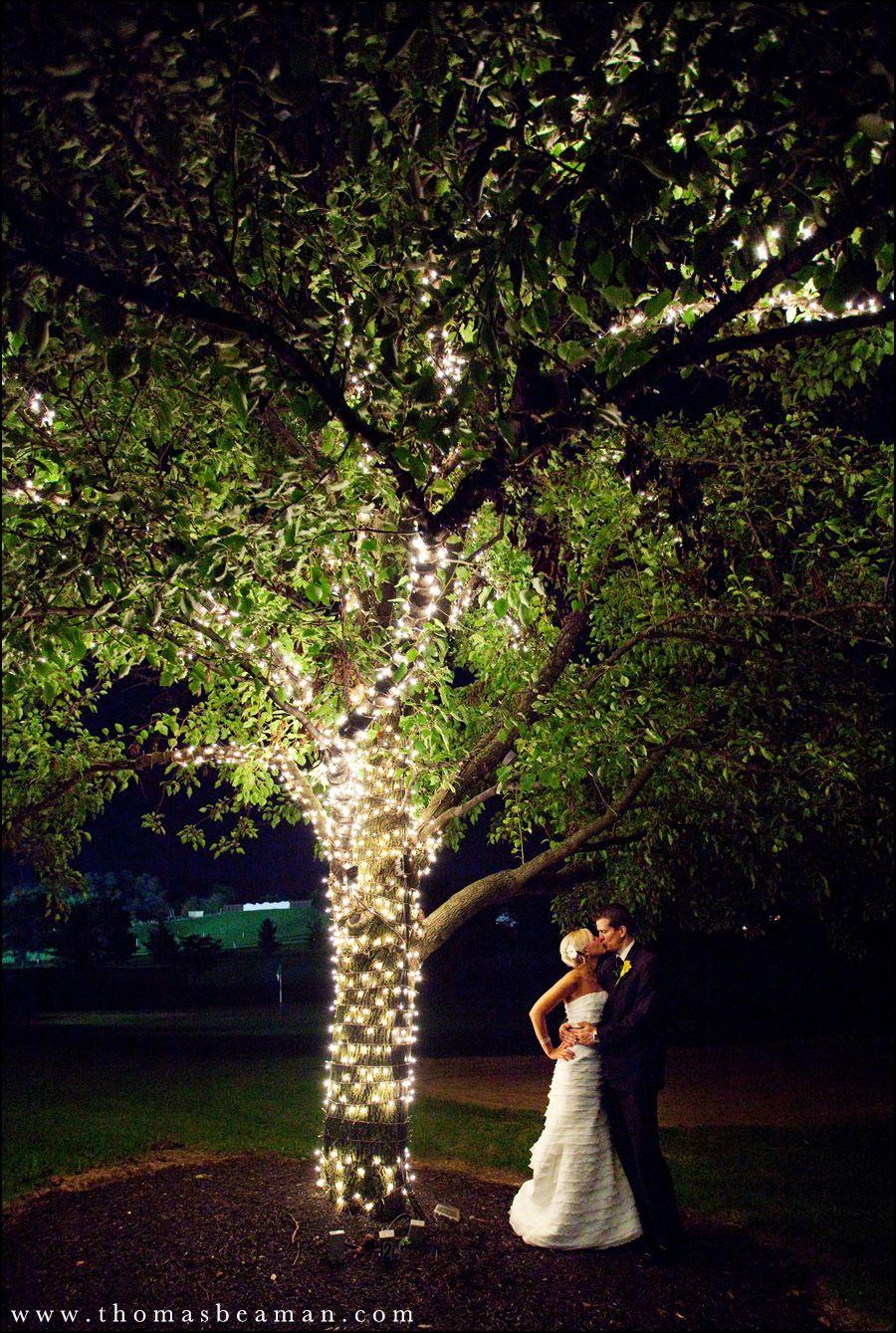 evening lighting so want an outdoor wedding reception tree