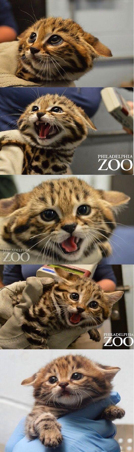 Fear My Wrath Humans Cute Animals Animals Beautiful Baby Animals