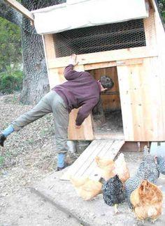 La production maison est une réponse de plus en plus fréquente à la crise. C'est la raison pour laquelle de nombreuses familles se tournent vers une solution presque aussi vieille que le monde : adopter une poule pondeuse :-)  Découvrez l'astuce ici : http://www.comment-economiser.fr/adopter-poule-doublement-economique.html?utm_content=buffer608b2&utm_medium=social&utm_source=pinterest.com&utm_campaign=buffer