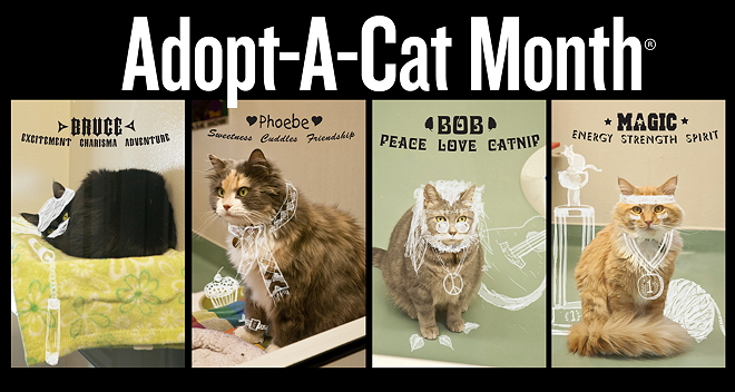 June Is Adopt A Cat Month Cat Adoption Cat Shelter Kitten Season