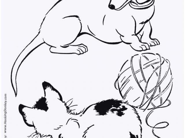 57 Das Beste Von Ausmalbilder Tiere Zum Ausdrucken Stock Ausmalbilder Bilder Zum Ausmalen Ausmalbilder Tiere