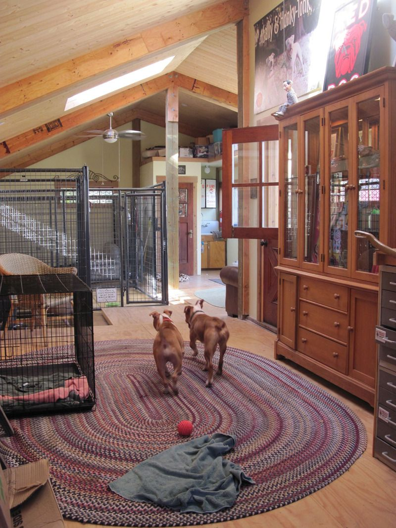 Barn Buddies At The Bad Rap Barn Best Kennel Ever Http Www Badrap Org Dog Kennel Dog Kennel Cover Kennel Cover