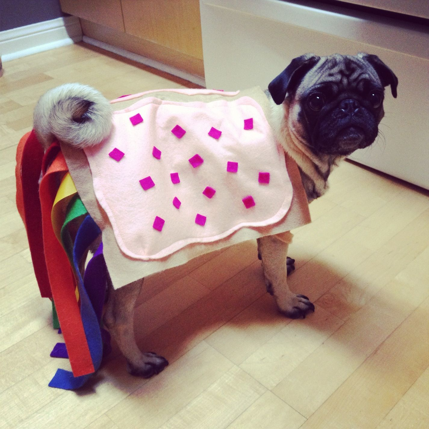 nyan pug is our favourite halloween costume this year making the internet sensation nyan cat into a felted pug version is fantastic - Pugs Halloween