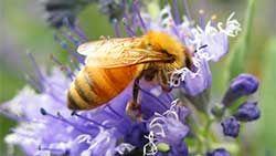 MN Hobby Beekeepers |
