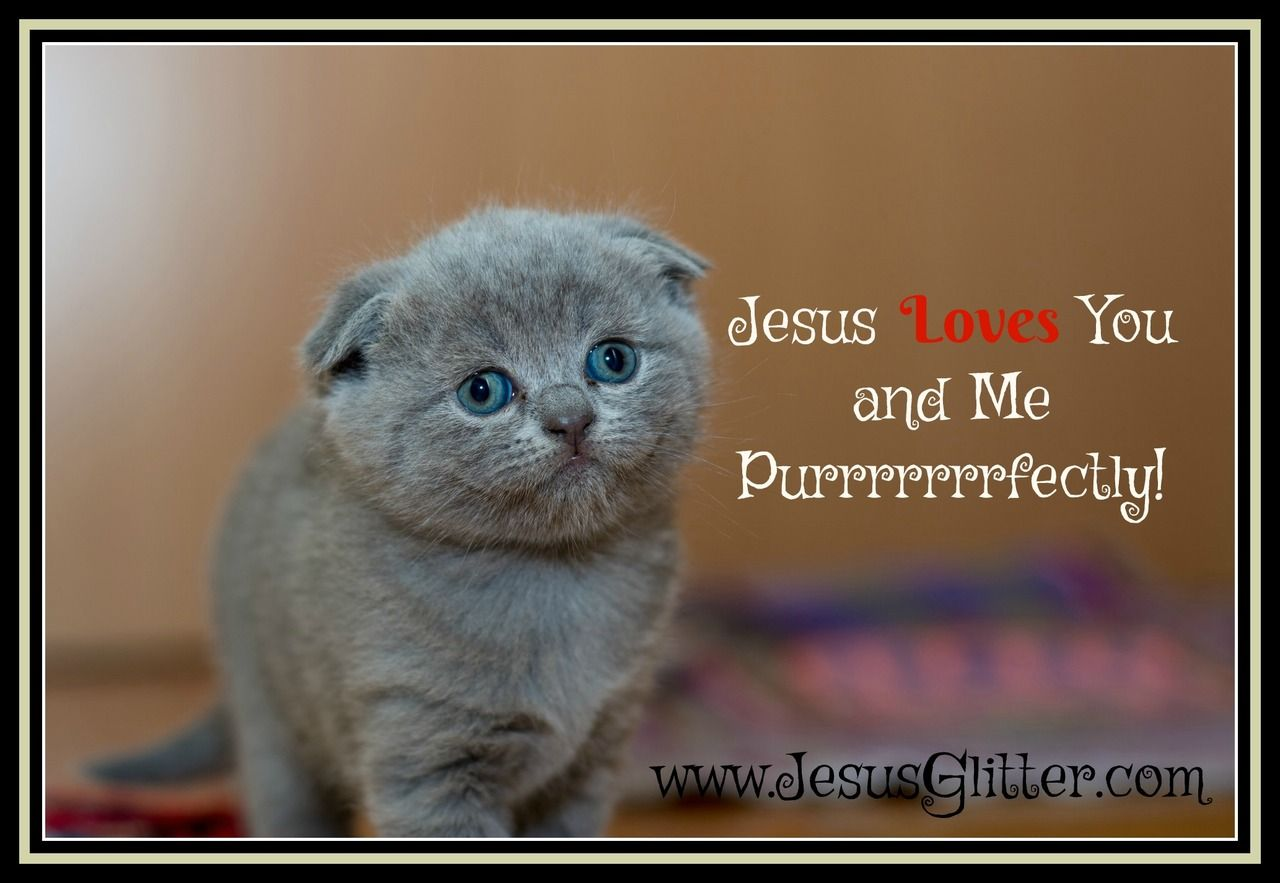 We All Need To Be Reminded Jesus Loves Us Happy Friday Kittens Cutest Cat Care Kitten
