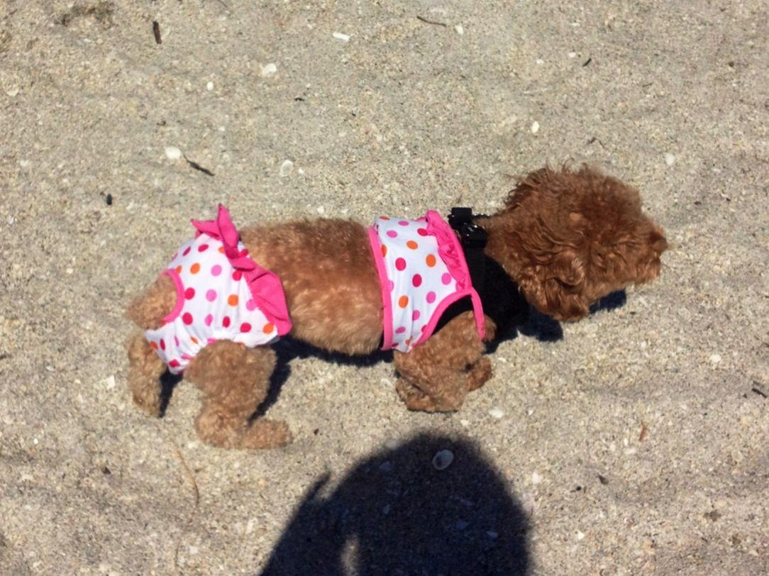 Sophie Toy Poodle Dog Bathing Suit Doggy Dog Clothes