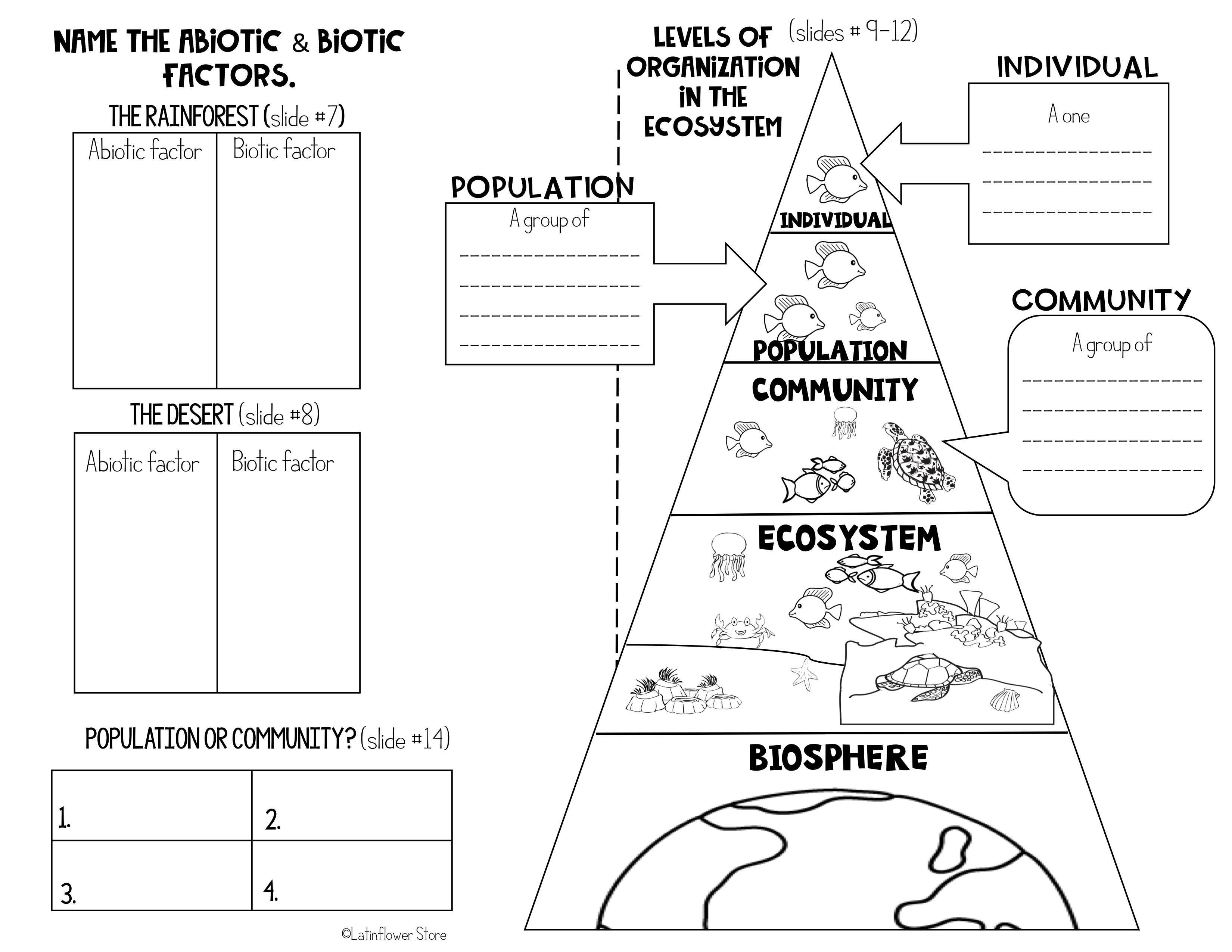 Ecosystem Powerpoint And Notes