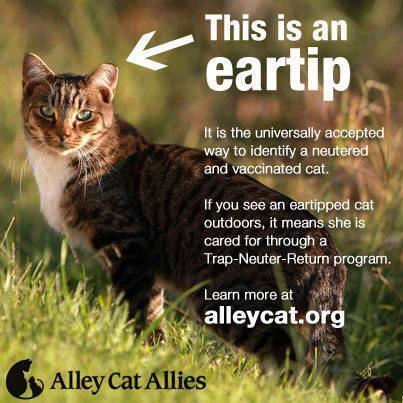 October 16th Is National Feral Cat Day Feral Cats Alley Cat Allies Cats