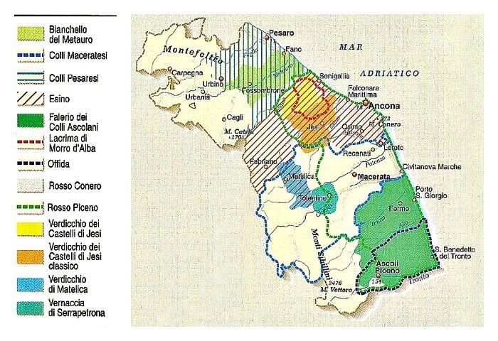 Italian Wine From Le Marche Italy Wine and Italia