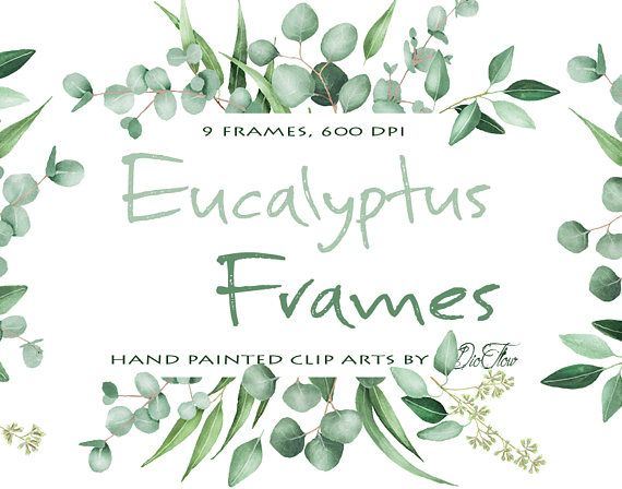 Watercolor Eucalyptus Clipart Frame Greenery Frames Clip Art Baby Silver Dollar Leaf Green Leaves Illustration Vector