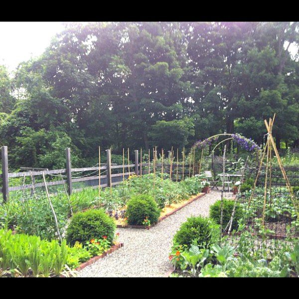 Herb Garden On Fence: The Fence. Lower Fence And Then Supports For The Tall Deer