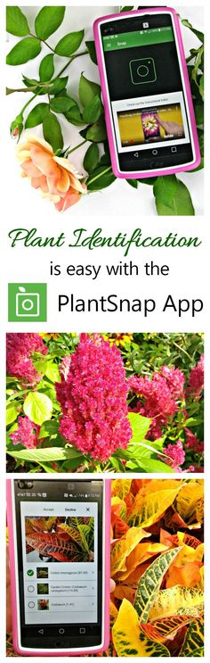 The PlantSnap Mobile App makes identifying plants and flowers as easy as a click on your phone or mobile device. #hunting4plants #ad