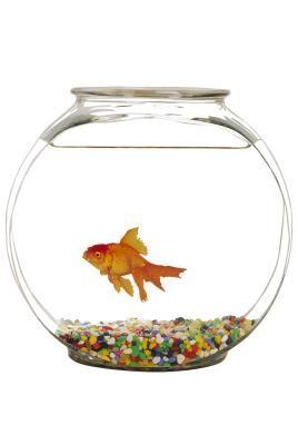 C mo hacer una pecera para peces betta con plantas peces for Como hacer una granja de peces
