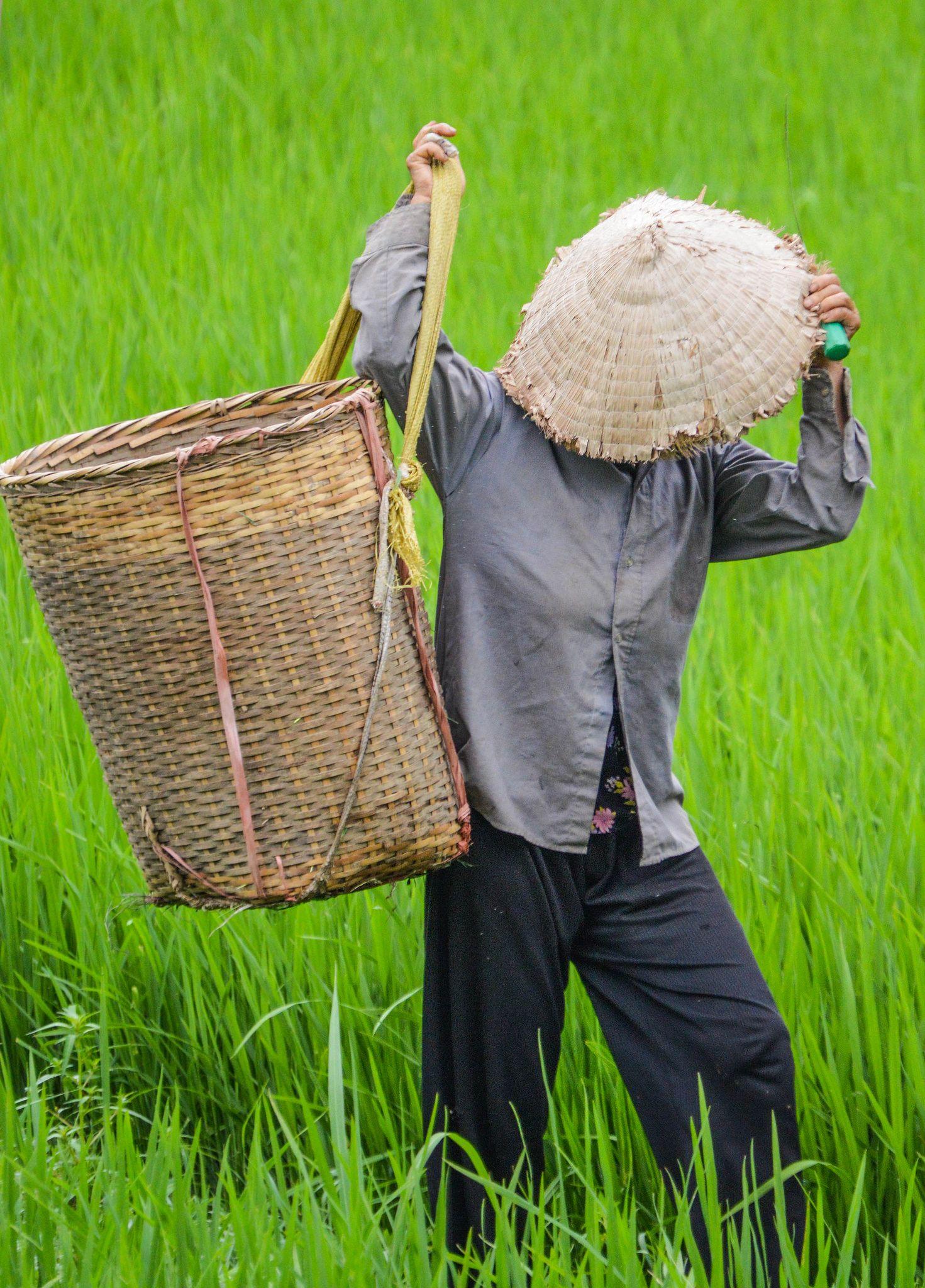 ป กพ นโดย Leerawadee ใน ว ถ ช ว ตชาวนา การถ ายภาพธรรมชาต