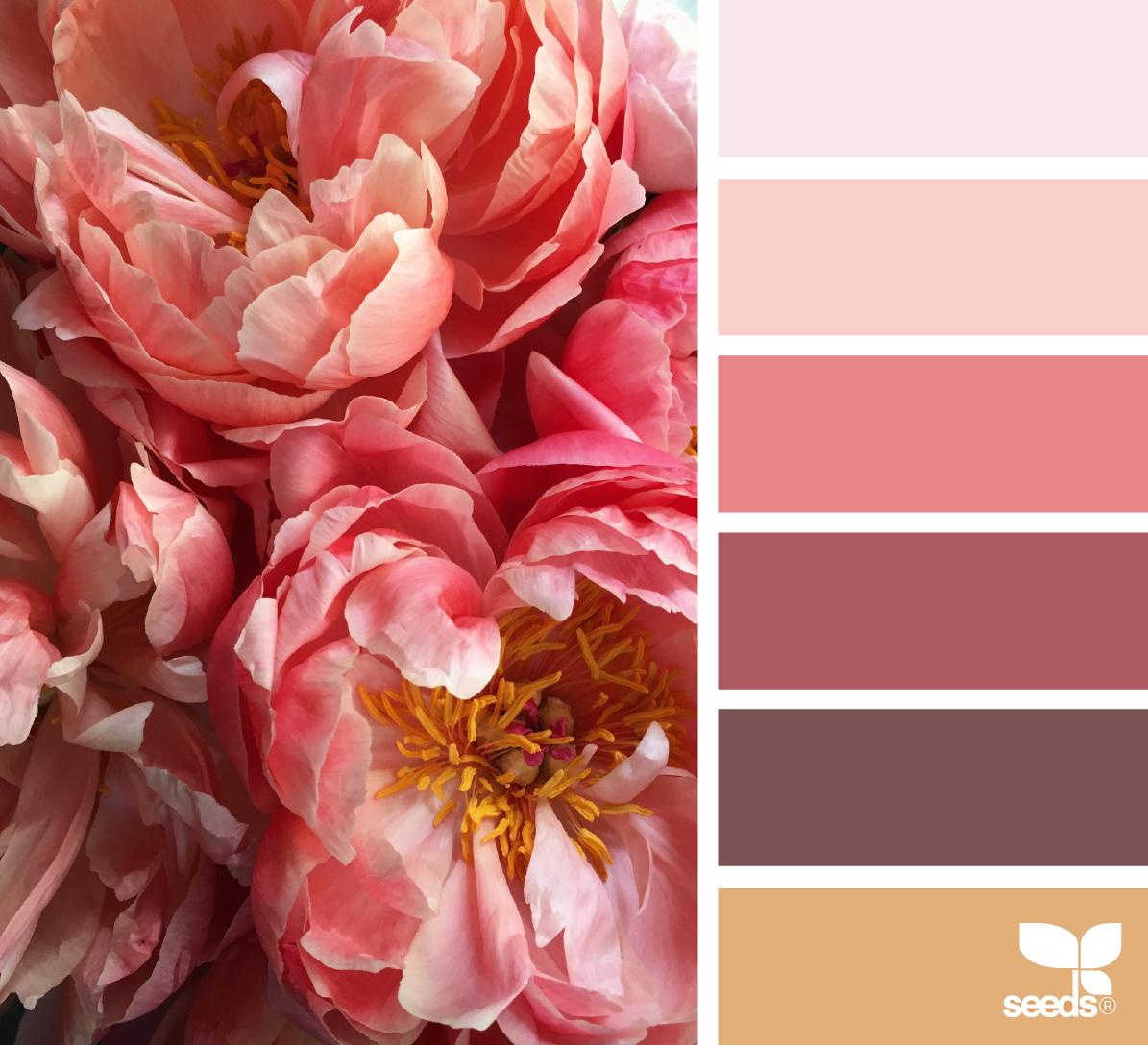 Peony palette farbwahl farben farbpalette und palette - Wandfarbe ocker ...