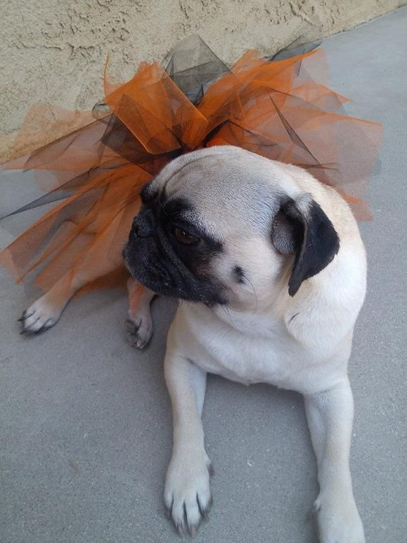 tutu halloween dog tutu pugs tutu for dogs by pugsngiggles http - Pugs Halloween