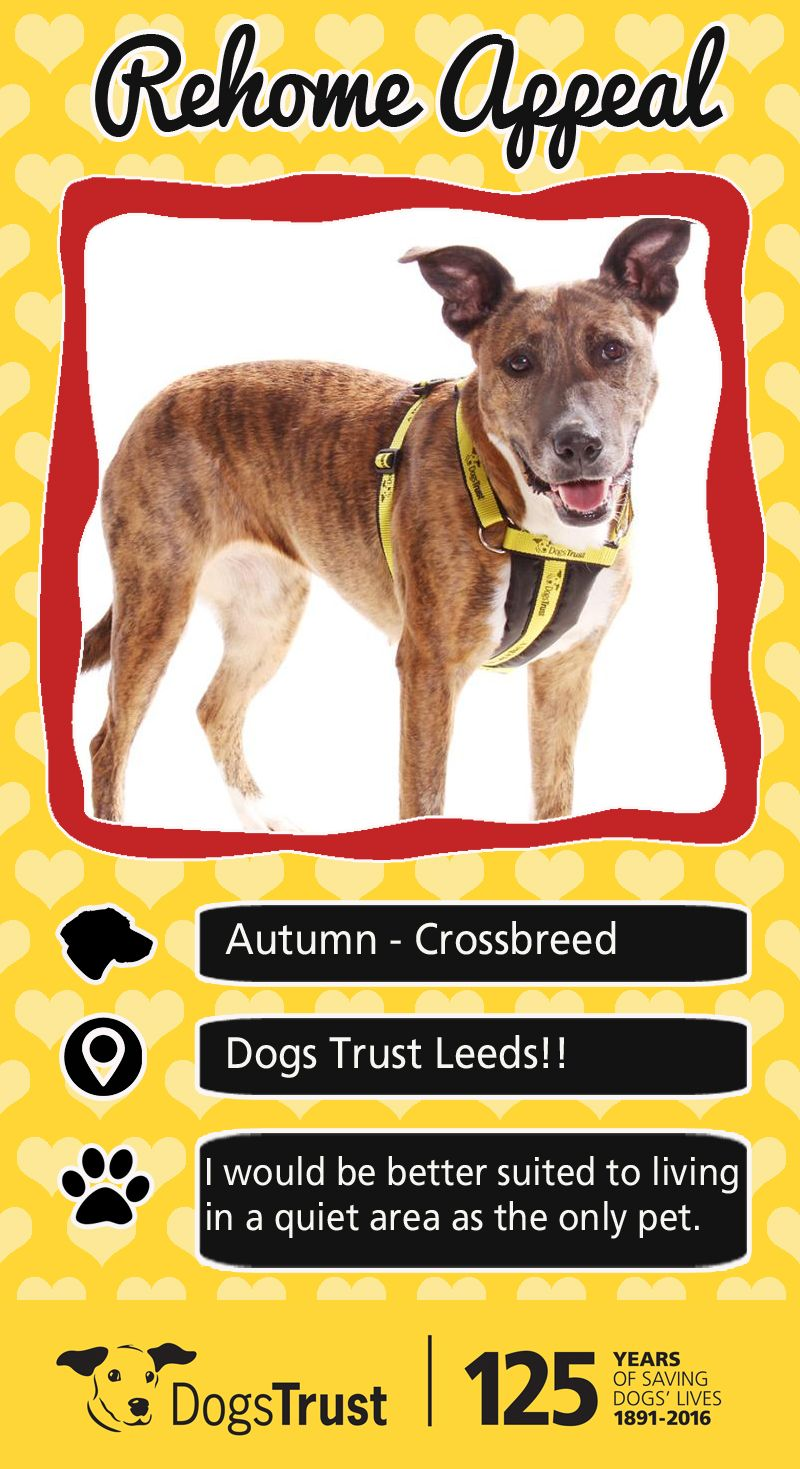 Autumn arrived at dogs trust from the local pound she was
