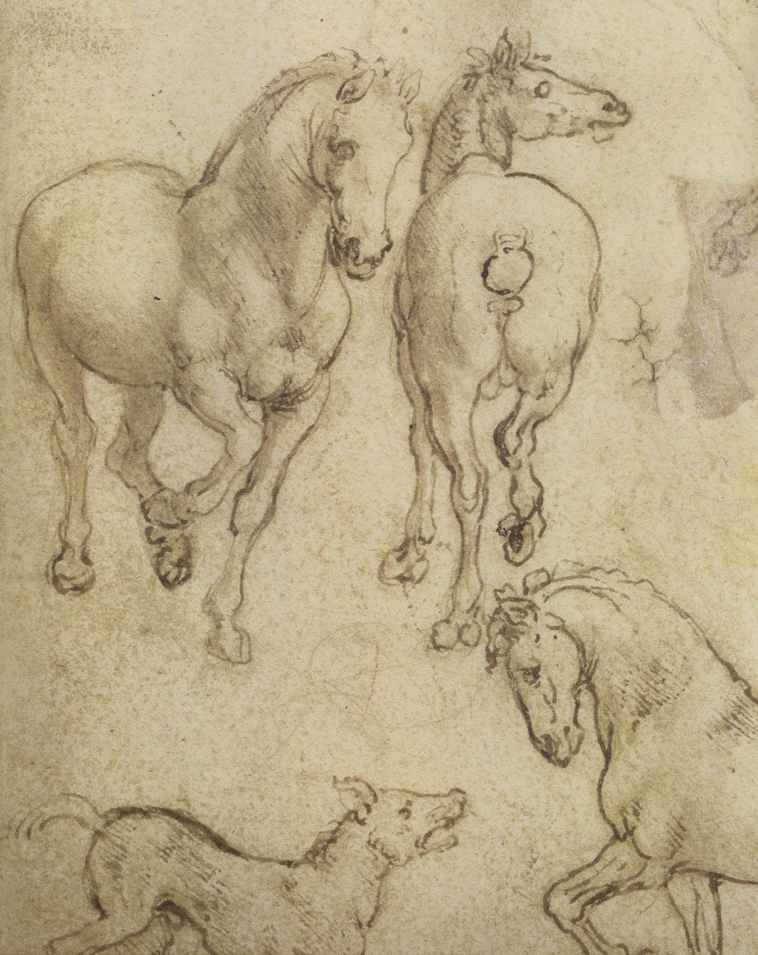 Leonardo-da-Vinci---Drawings---Animals--Horses 1.jpg   Horse drawings,  Animal drawings, Horse painting